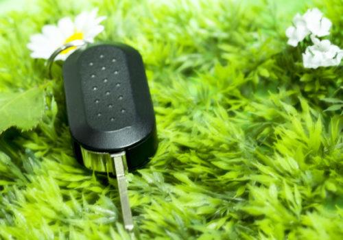 Green key whit flower